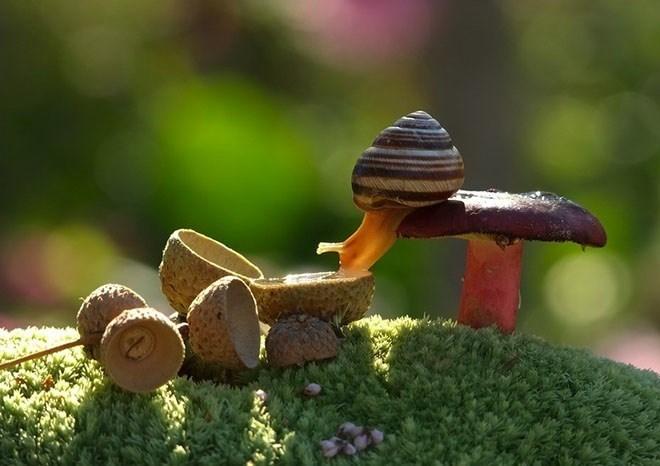 snails - Snails and slugs
