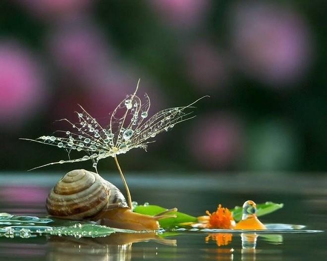 snails - Nature