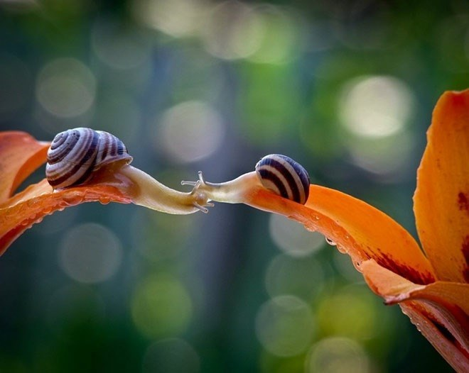 snails - Water
