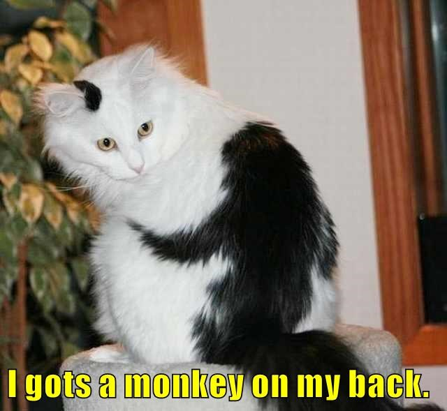 Cheezburger Image 9090303488