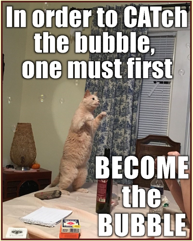 Cat Bubble meme in order to catch the bubble you must first become the bubble