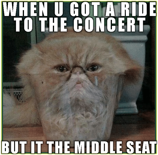 Scrunched up ride to the concert cat meme