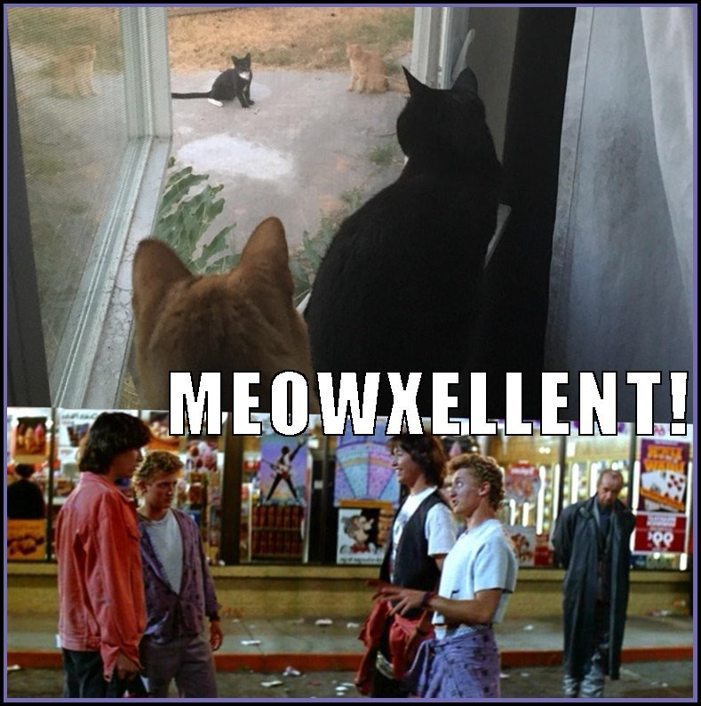 meme Bill and Ted's Excellend Adventure but with cats