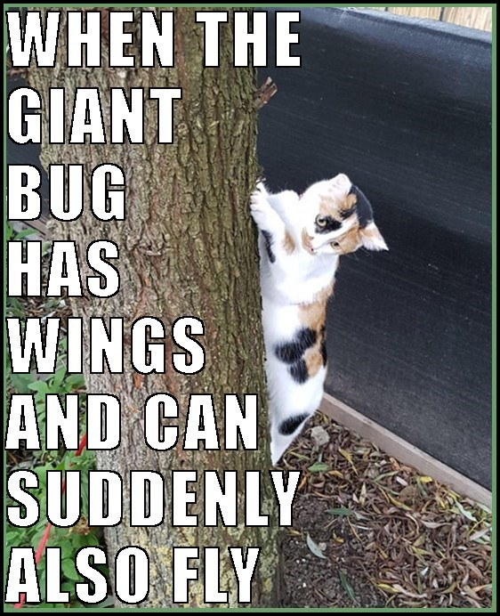 Cat meme of kitty in a tree scared, with caption about when the bug suddenly has wings and can fly