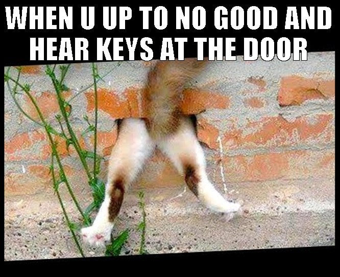 Funny meme about hiding when you are up to no good and then hear someone at the door with keys
