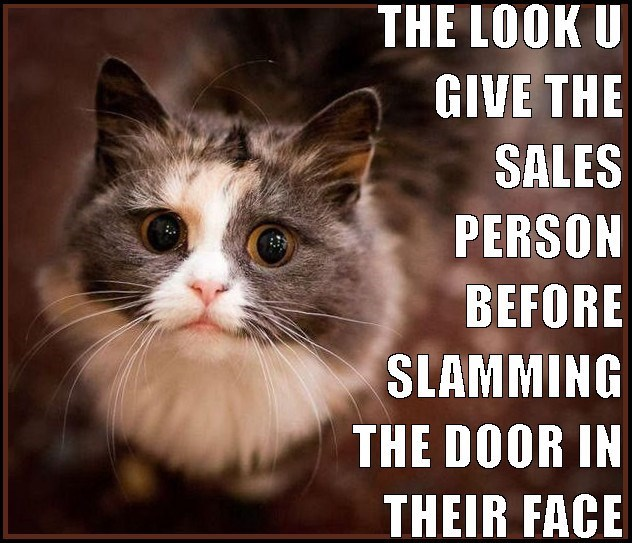Cat meme of that wide eyed look you give the salesperson before slamming the door in their face