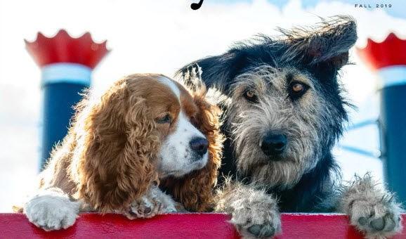 lady tramp disney dog shelter animal
