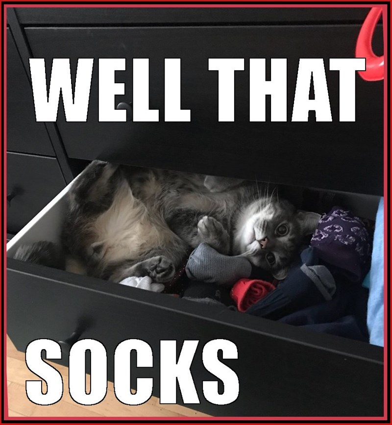 Funny cat meme of pun with sucks and socks and a cat hiding in the sock drawer