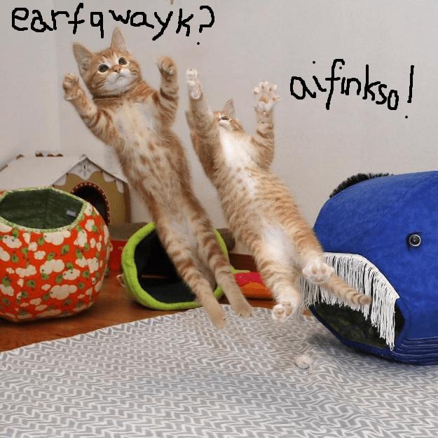 cat meme kitten - 9090931200