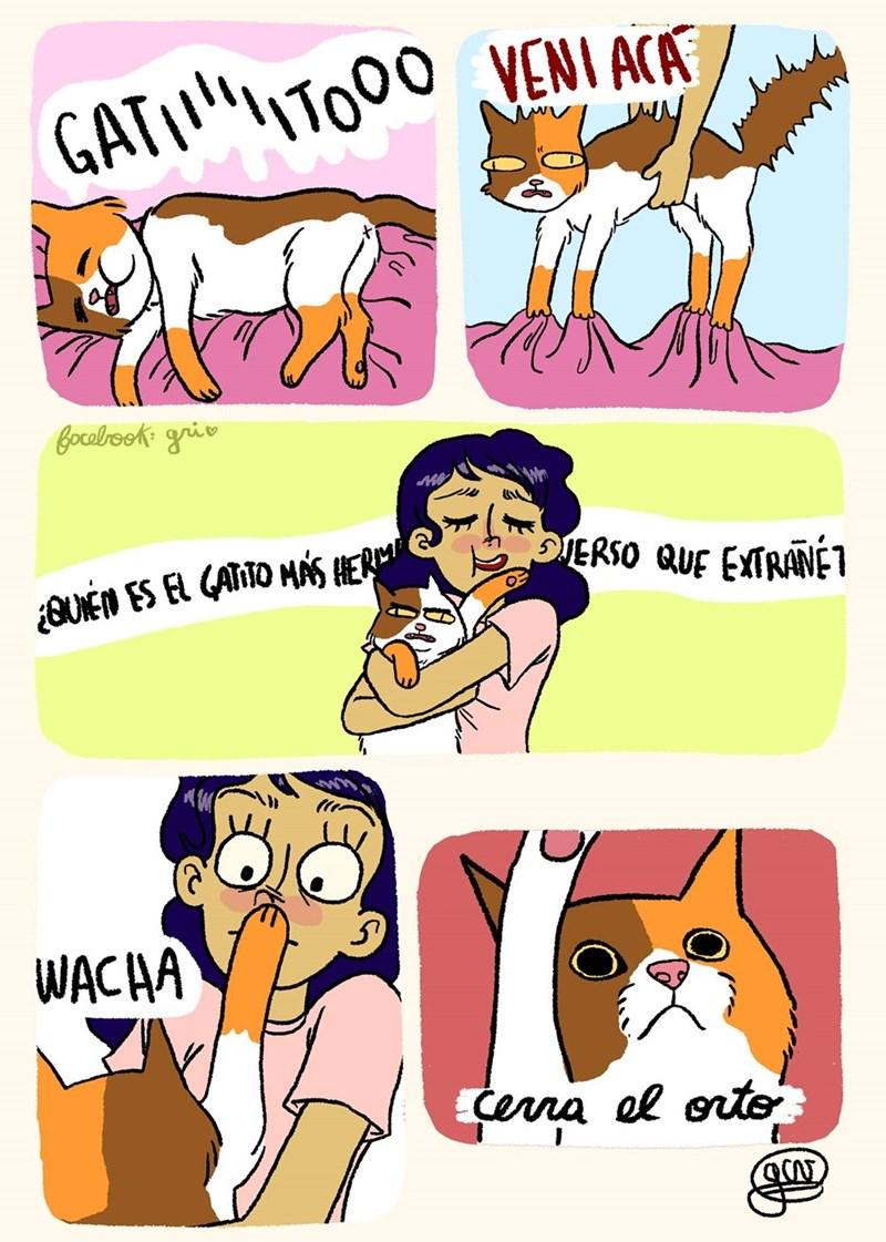 vineta de gato que es obligado a hacerse acariciar