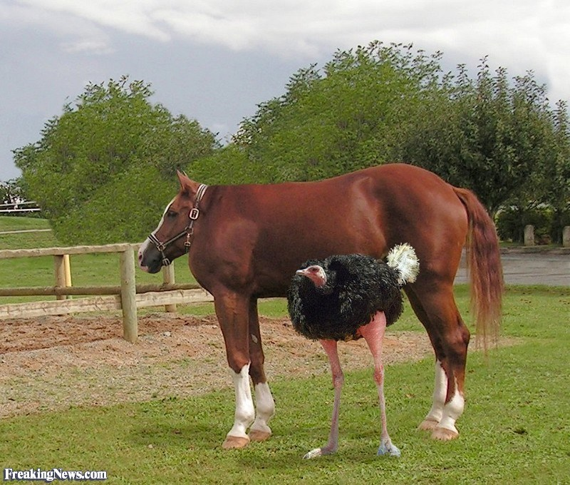 Horse - Freaking News.com