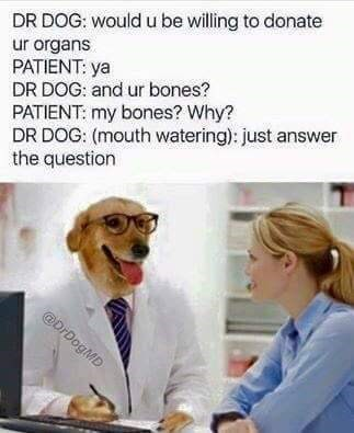 Doctor Dog meme about human donating their organs along with their bones