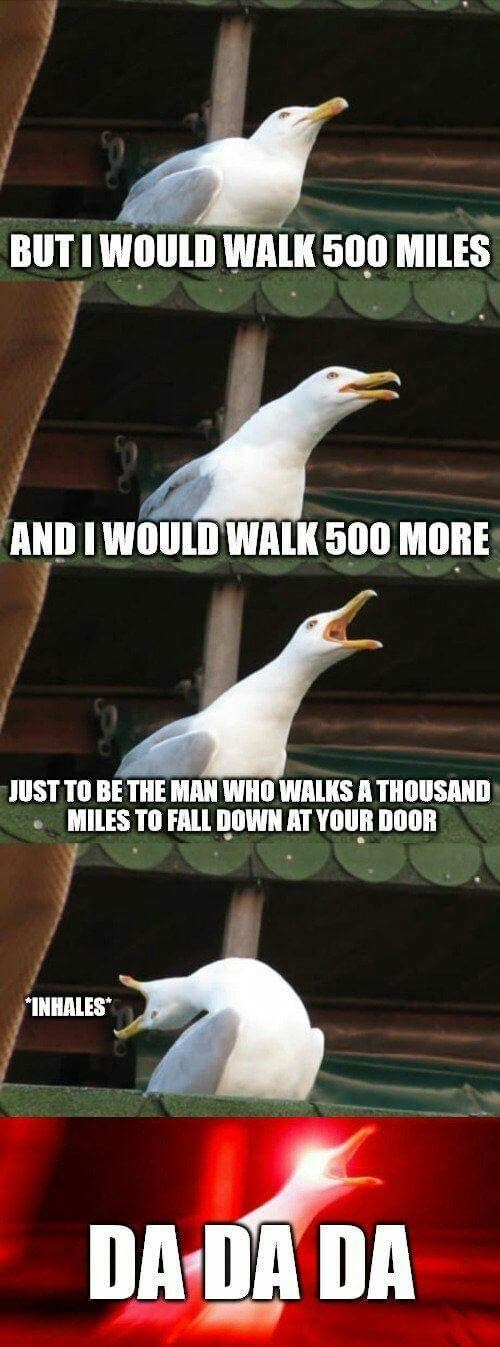 Screaming Seagull meme about that walk 500 miles song