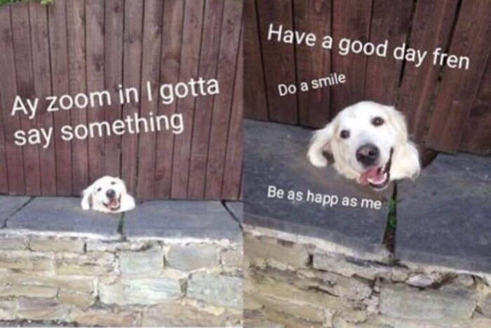 Dog meme with zoom in and say nice things as he peeks from under the fence