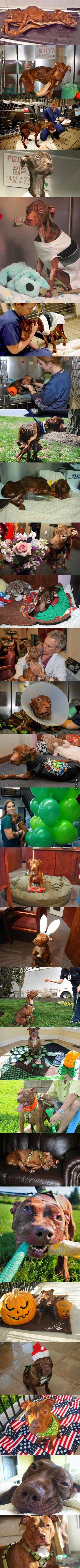 perro encontrado moribundo y su milagrosa recuperacion