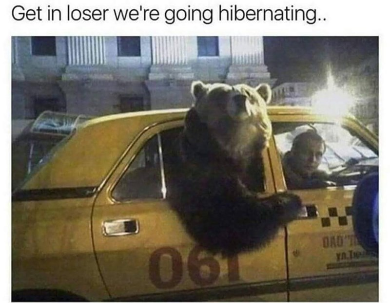 Funny meme about getting in a car to go hibernating, bear in a car.