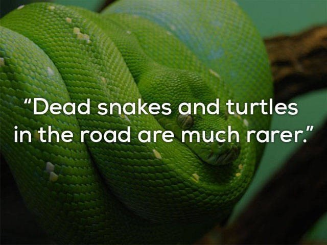 """Green - """"Dead snakes and turtles in the road are much rarer."""""""