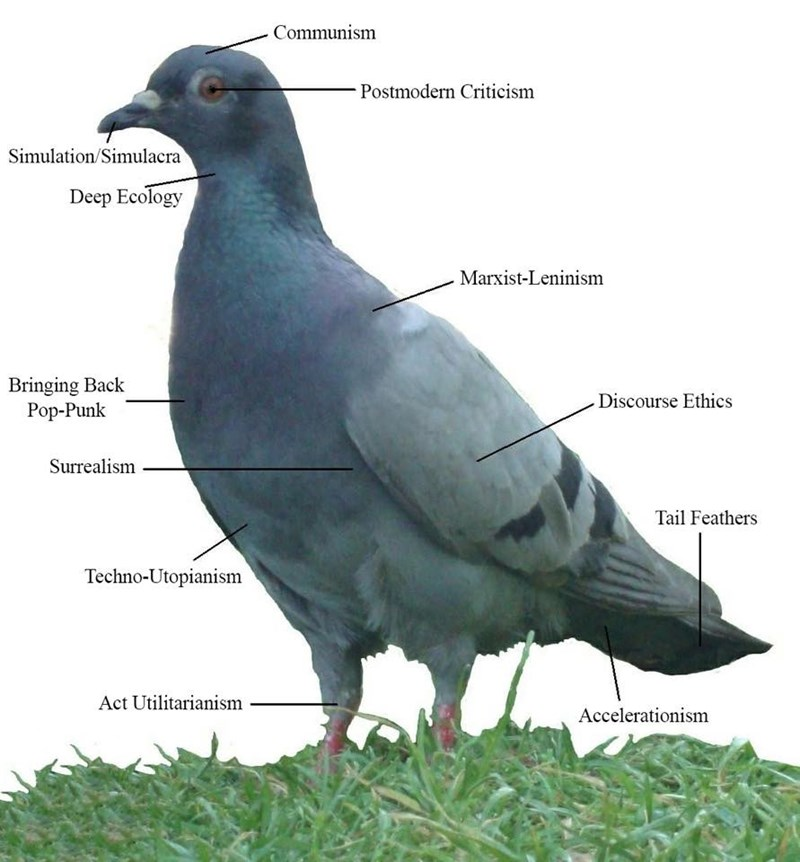 Various complex social and philosophical concepts annotated onto a photo of a simple pigeon