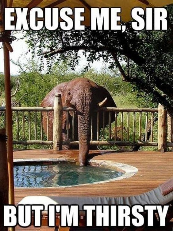 Elephant - EXCUSE ME, SIR BUTIM THIRSTY-