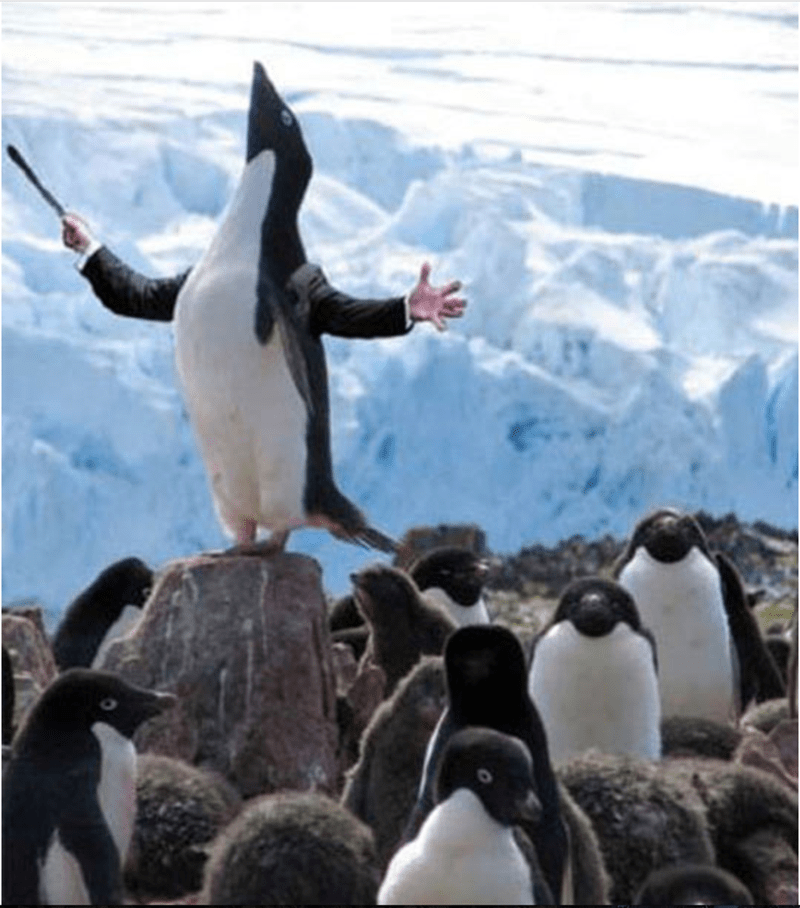 bird with arms - Penguin