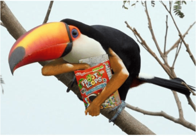bird with arms - Toucan - FROOT LOOPS CARKCERNE