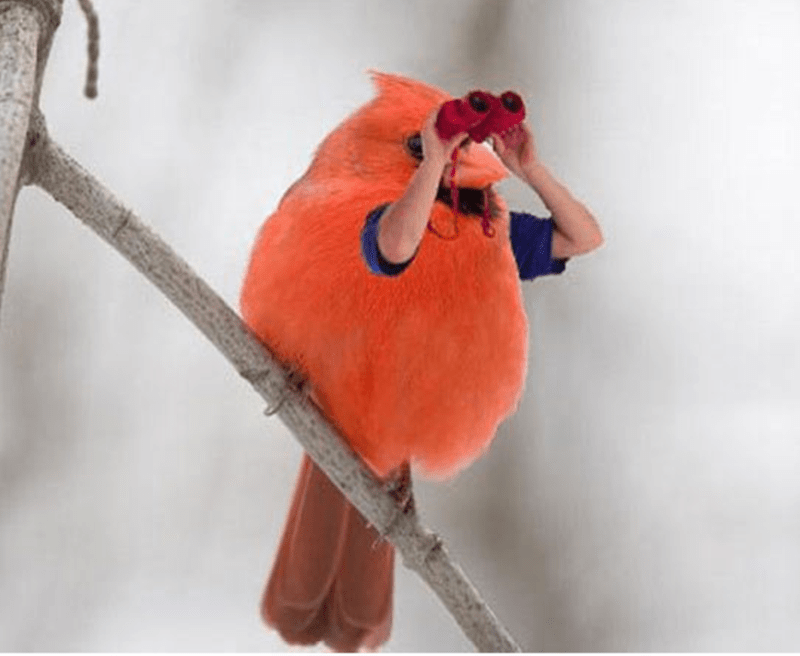 bird with arms - Cardinal
