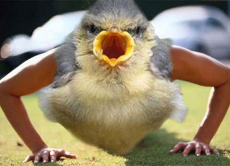bird with arms - Vertebrate