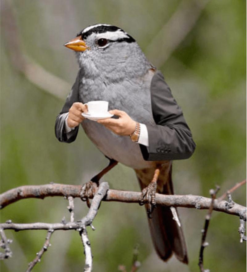 bird with arms - Bird