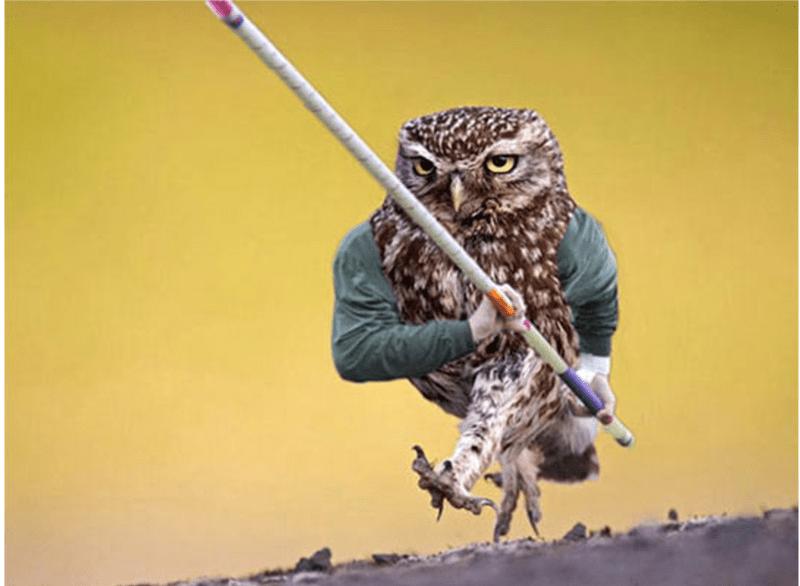 bird with arms - Owl
