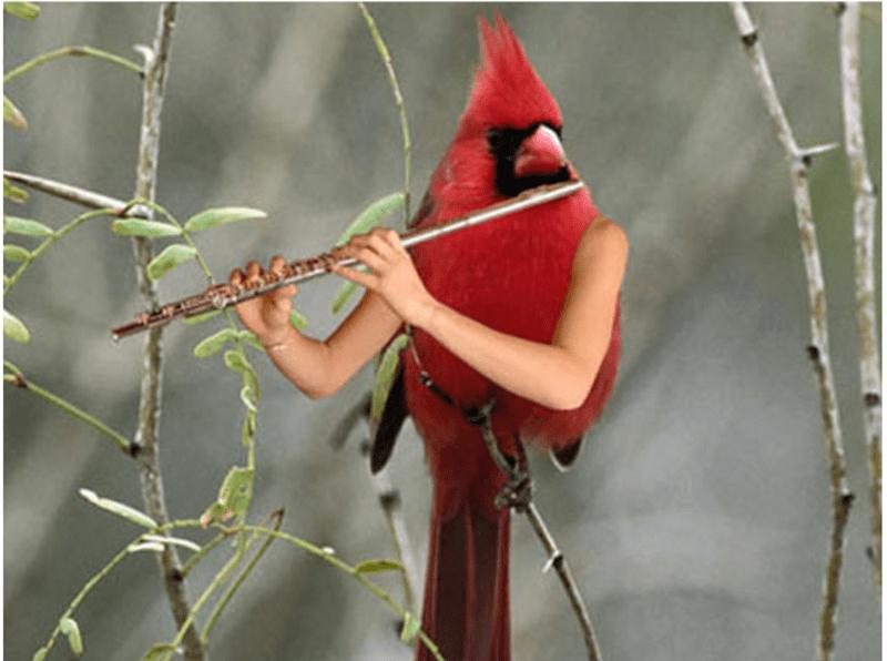 bird with arms - Northern Cardinal