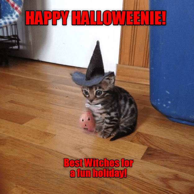 Cat - HAPPY HALLOWEENIE! Best Witches for a fun holiday!
