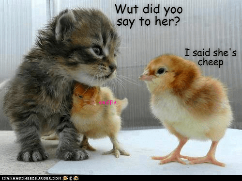 Vertebrate - Wut did yoo say to her? I said she's cheep shuffle ICANHASCHEE2EURGER cOM