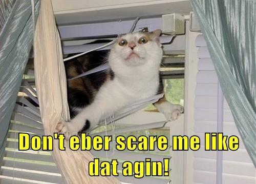 Cat - Don'teber scare me like dat agin!