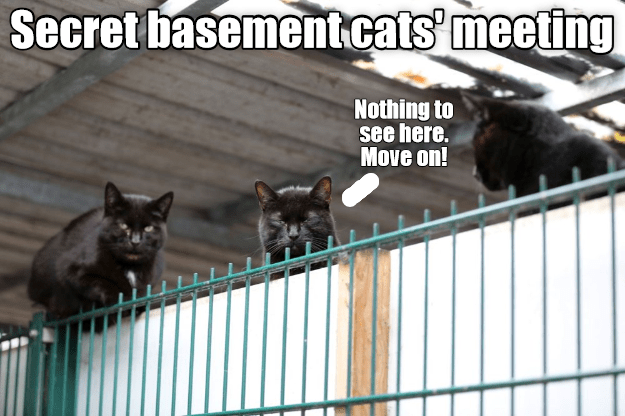 Black cat - Secret basement.cats' meeting Nothing to see here. Move on!
