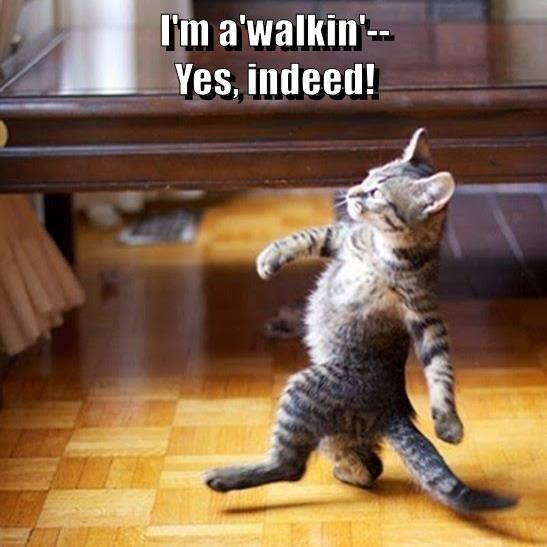 Cat - I'm a'walkin'- Yes, indeed!
