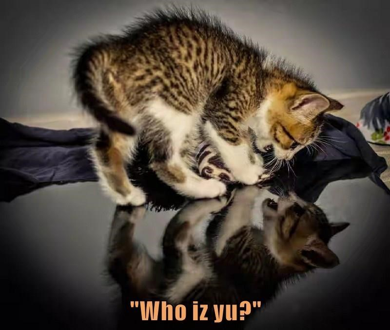"Cat - ""Who iz yu?"""