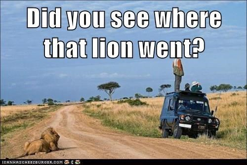 Wildlife - Did you see where that lion went? ICANHASCHEE2EURGER cOM