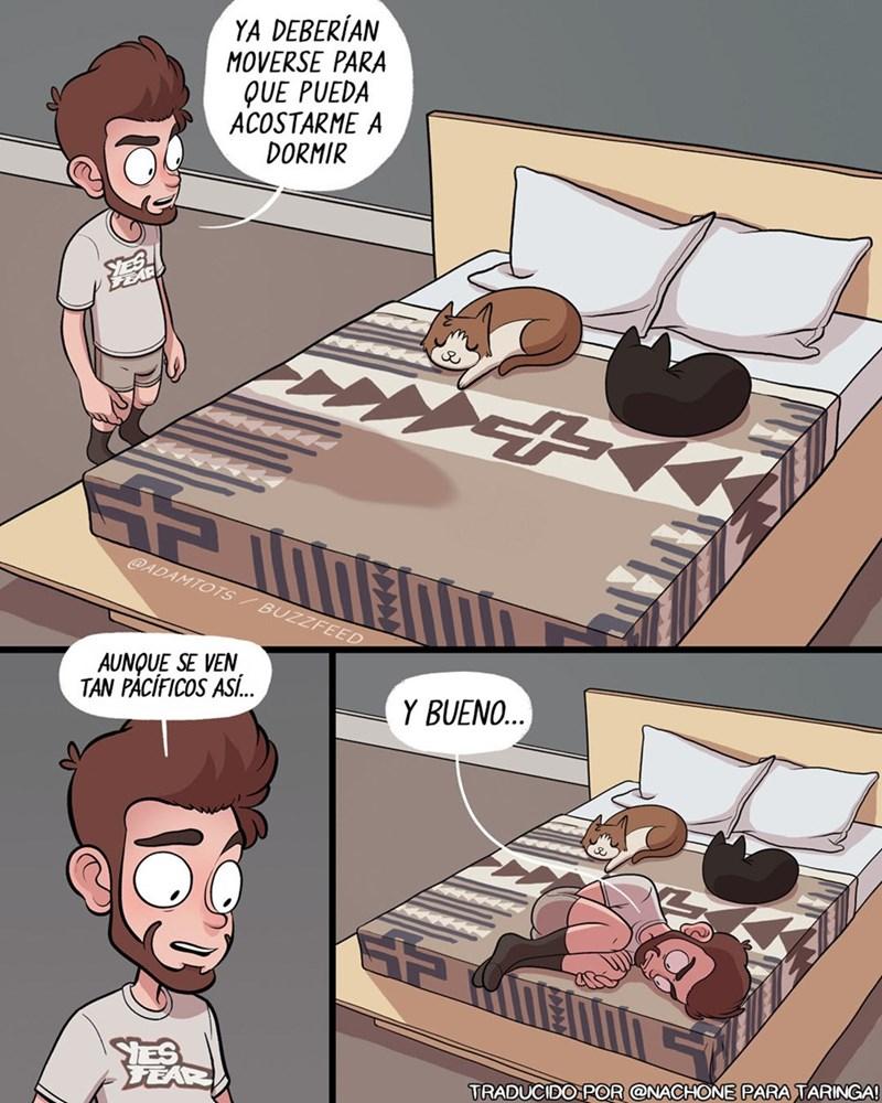 cuando te vas a acostar y tus gatos estan en la cama