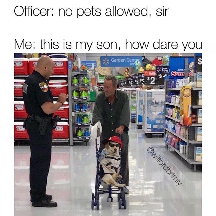 Funny meme about person pretending their dog is their son.