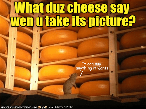 Cheezburger Image 9092131072