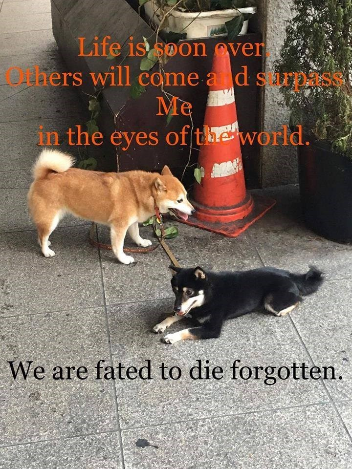 Dog - Life is soon over thers will come a d spass Me in the eyes of(the world. We are fated to die forgotten.