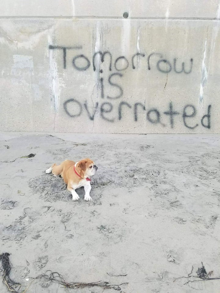 Canidae - Omorrow iS Overrated iS5