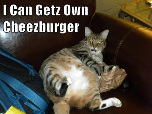 Cheezburger Image 9092344064