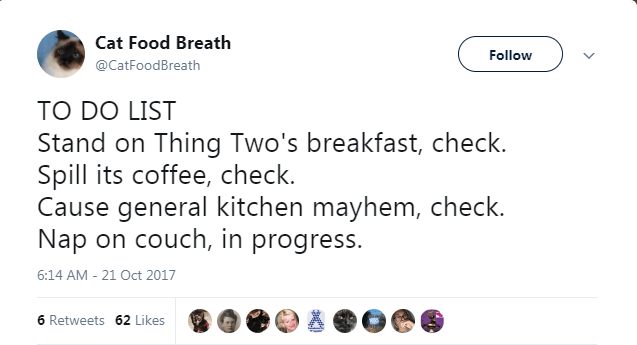 Text - Cat Food Breath Follow @CatFoodBreath TO DO LIST Stand on Thing Two's breakfast, check. Spill its coffee, check. Cause general kitchen mayhem, check. Nap on couch, in progress. 6:14 AM - 21 Oct 2017 6 Retweets 62 Likes