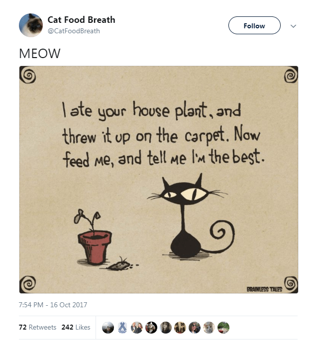Text - Cat Food Breath Follow @CatFoodBreath МEOW late your house plant, and threw it up on the carpet. Now feed Me, and tell Me lM the begt. BRAINLESS TALES 7:54 PM - 16 Oct 2017 72 Retweets 242 Likes