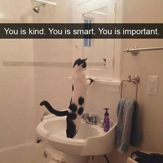 Cat - You is kind. You is smart. You is important.