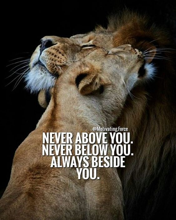 Lion - @Motivating Force NEVER ABOVE YOU. NEVER BELOW YOU. ALWAYS BESIDE YOU.