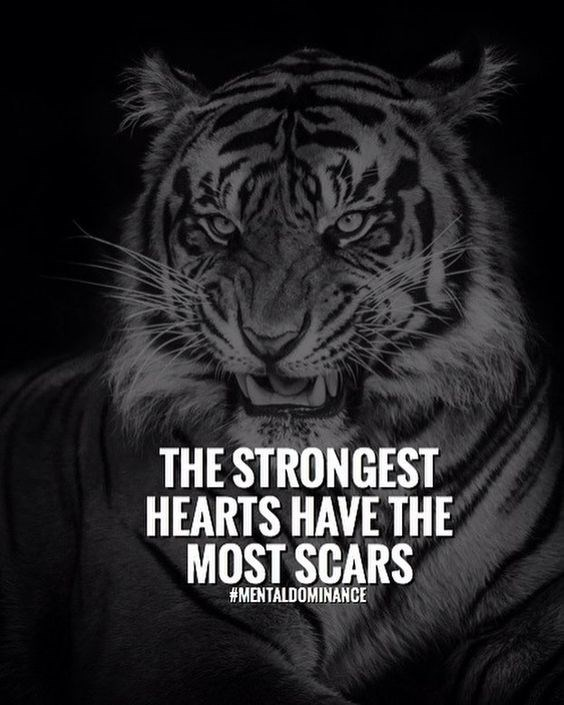 Bengal tiger - THE STRONGEST HEARTS HAVE THE MOST SCARS #MENTALDOMINANCE