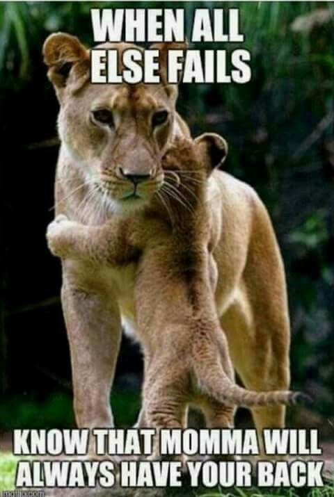 Wildlife - WHEN ALL ELSE FAILS KNOW THAT MOMMA WILL ALWAYS HAVE YOUR BACK