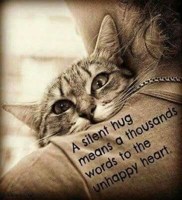 Cat - A silent hug means a thousands words to the unhappy heart. התתגא